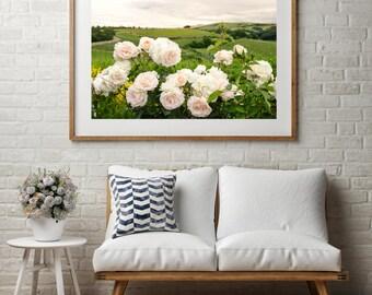 "Vineyard Landscape Photography, Large Wall Art Print, Italy Photography, Travel Photography, Pink Flower, Tuscany, ""Vineyard View"""