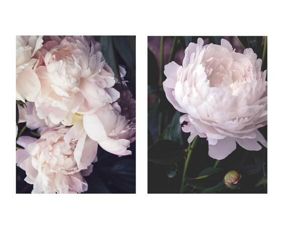 Peony Prints, Still Life Prints,Flower Art, Peony Print Set, Pastel Art, Botanical Photos, Cindy Taylor Photography