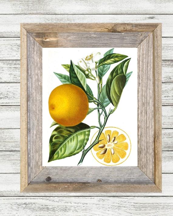 Vintage Orange Botanical Illustration Wall Art Printable