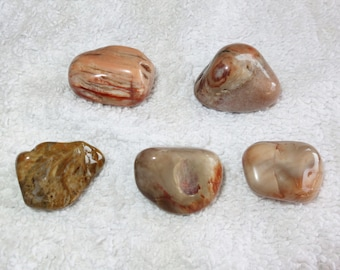 Destash Lots - Qty 5 - Petrified Wood Tumbles / Tumbled - Inventory Reduction