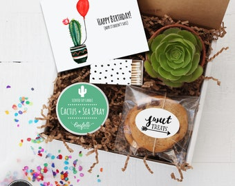 Hope It Doesn't Succ Birthday Gift Box - Send a Birthday Gift | Succulent Gift | Friend Gift | Succulent Birthday Card