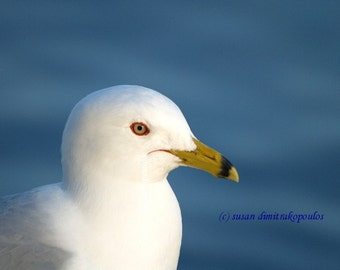 Smiling Seagull card, bird lovers card, beach, gulls, nature print, bird photograph