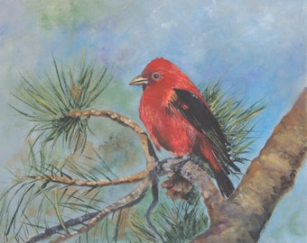 Aceo Baseball card size Scarlet Tanager bird in pine tree