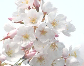 Spring Blossom Photo Print, Floral Home Decor, Cherry Blossom Photography, Soft Pink Blossom Wall Art, Nature Print, Flower Photography