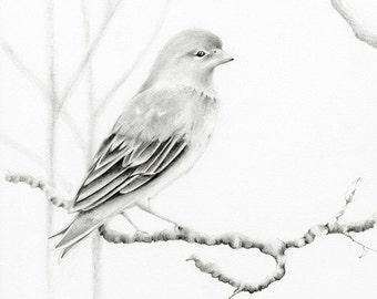 Bird Pencil Drawing Fine Art Wanderlust Print of my Hand Drawn Illustration Sketch Original Bird Print Woodland Wall Art
