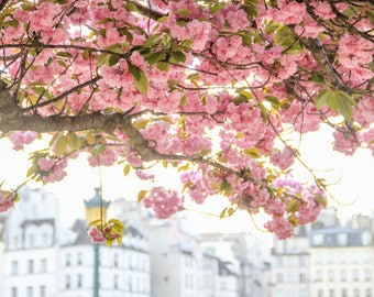 Paris flower photo, spring photography, cherry blossoms, fine art Paris photography, blossoms in Paris, wall decor