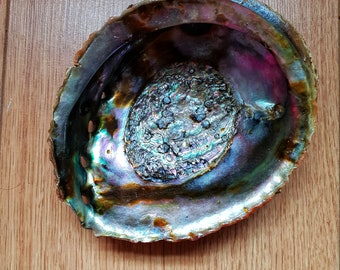 Giant Abalone shell | Smudging | Ceremonies | Meditation | Stress | Polished