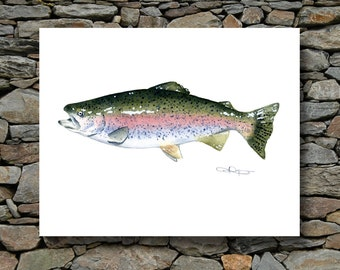 Rainbow Trout Art Print - Watercolor Painting - Signed by Artist DJ Rogers - Fly Fishing - Wall Decor