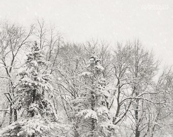 Winter White - snow photography, nature, winter landscape, decor, fine art print, wall art