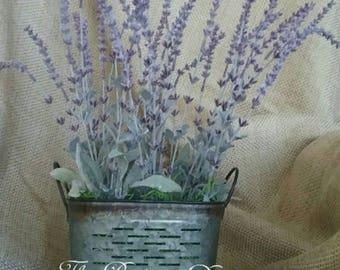 Lavender in Olive pail