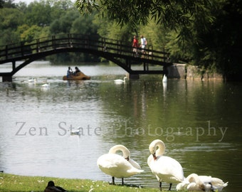 Swans in the Park Photo. Wildlife Photography. Bird Wall Decor. River Photography. Unframed Photo Print, Framed Photography, Canvas Print.