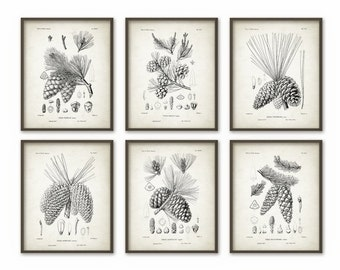 Pine Cones Wall Art Prints Set of 6 - Antique Woodland Illustrations - Botanical Home Decor - Pine Cone Posters - Forest Art Print (AB365)