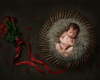 Digital backdrop, background newborn baby girl or boy    basket   brown  overhead shot fur fluff gray Valentines day bouquet red roses
