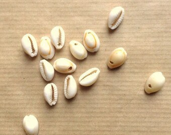 Set of white, 1 hole, 13 mm cowrie shells