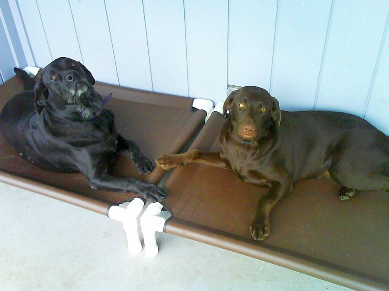 id houndhammock facebook home hammock hound pet media