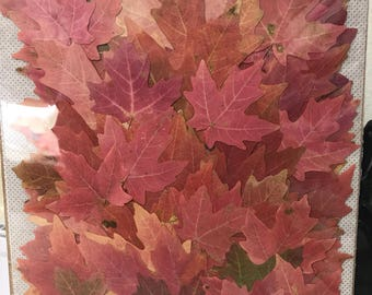 Fall Maple Leaves assorted colors 100 pack