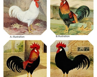 Rooster Coasters Recessed Burlap Textured Hemmed Edges Picture Perfect  Polyester Laminated, Set of 4