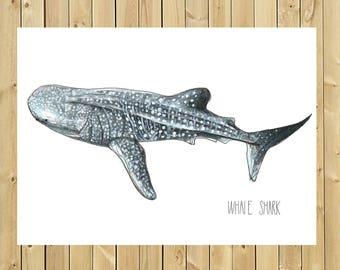 Whale shark illustration, A3, A4 or A5 blade size, whale shark