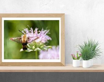 Hummingbird Moth Pollinator Fine Art Nature Print