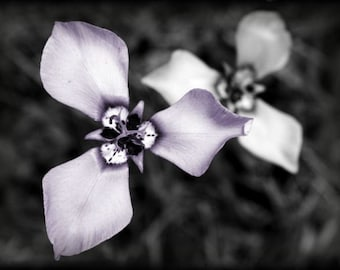 "Flower mini photo, ACEO photograph, botanical, mini print, purple, gray -- ""Bold Beauty"" (2.5 x 3.5 inches)"
