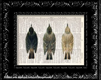 Bird Trio  Vintage Dictionary Print Vintage Book Print Page Art Upcycled Vintage Book Art