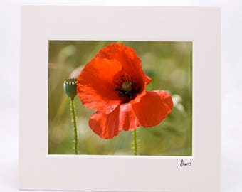 Poppy 8x10 Mounted Print