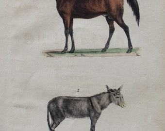 1833 fine antique lithografic print horse donkey handcoloured