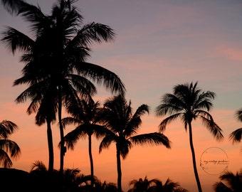 Aruba photography-trees-ocean photography-silhouette - vacation photo-sunset photo - Original fine art photography prints - FREE Shipping
