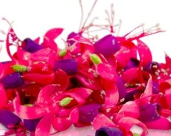 50 + Organic, MINIATURE FUCHSIA, Edible Flowers, Pink , Purple, Salads Garnishes, Drinks,