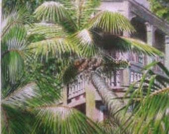 Veranda, Palms, and Shutters
