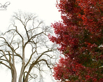 Winter and Fall Contrasting Trees Photography Print