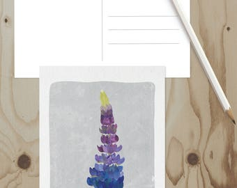 Lupine Postcard