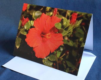 Red Hibiscus (Note Card)