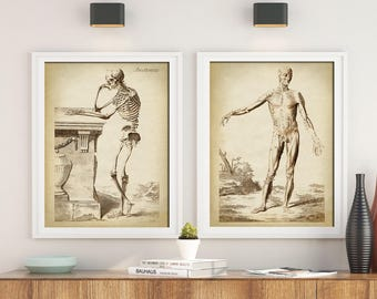 ANATOMY Print SET of 2, Anatomical Poster, Classical anatomy illustartion, Human Skeleton, Medical Print, Anatomy Chart, Antique Anatomy