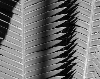 Palm Photograph, Tropical Decor, Black and White Photography, Botanical Print, Shadows and Light, Photo of Leaves, Leaf Picture, Wall Decor