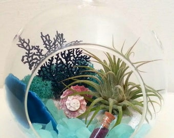 "Large 6.5"" Glass Caribbean Sea Air Plant Terrarium Kit Hanging Terrarium DIY Terrarium Graduation Gift  Birthday Gift Thank You Gift"