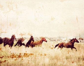 Horse Photograph, horse photography - 8x10 wild horses running photo, Colorado landscape, mountains nature, wall decor