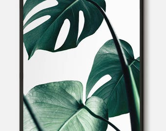 Monstera print, Monstera Leaf, Tropical Leaf print, Tropical print, Mint Green, Green leaves, Nature Photography, Philodendron, Nature Art