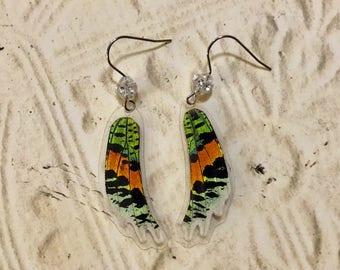 Real Butterfly Madagascar Sunset Moth Earrings Swarovski Crystals
