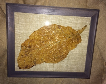 Framed tobacco leaf (1)