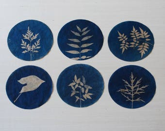 Botanical Art, original cyanotypes, upcycled, recycled art, set of six
