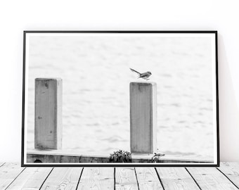 Beautiful Bird BW modern art print