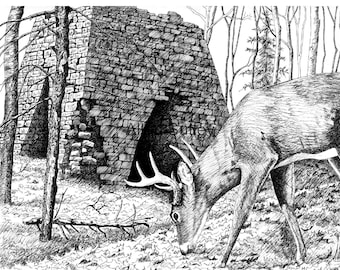 Buck, Iron Furnace, Deer Note Card with envelopes, Pack of 6, Reproduction from original, Allan Sutley Artist, Pen and Ink