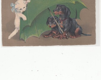 Marie Flatscher A/S Large Green Umbrella With Two Dachshund Under It-White Cat Discovers Dogs  Antique  Postcard