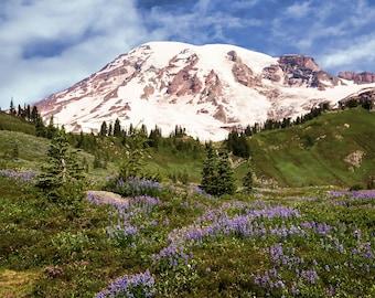 Mount Rainier, Landscape Photo, Nature Image, Wild Flower Image