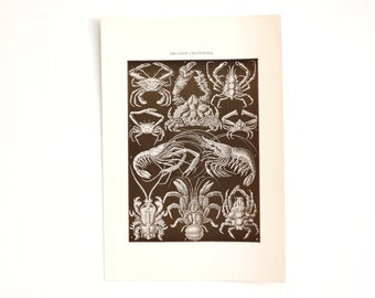 Vintage / Antique Decapod Crustacea Book Plate Engraving in Black and White, N1 (c.1900s) - Collectible, Home Decor, Ocean Art