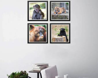 Animals Eating (4 Photo Series)