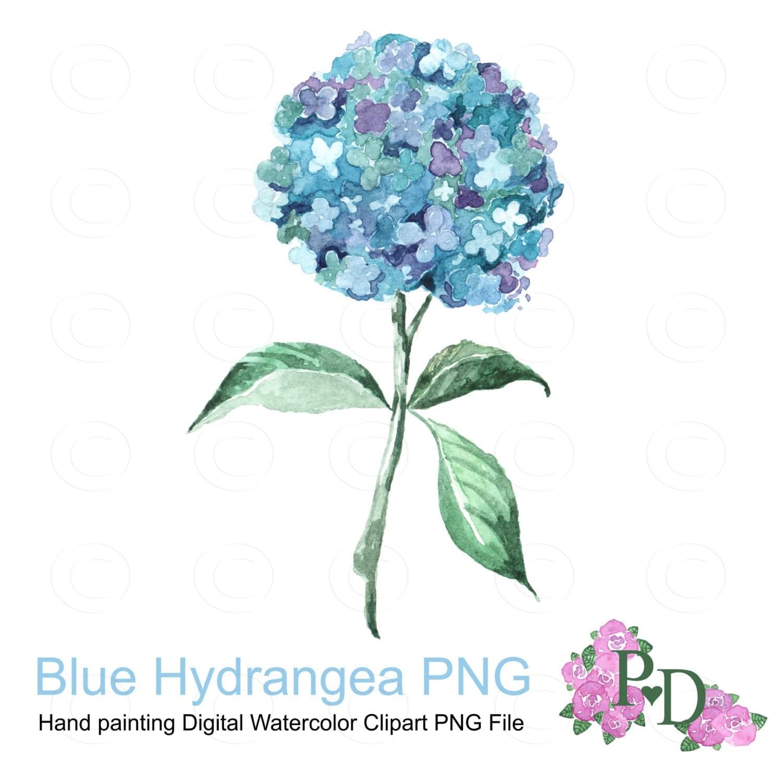 Watercolor Clipart Blue Hudrangea Clip Art