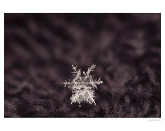 Nature Photography PRINT, Delicate Snowflake, Wall Art