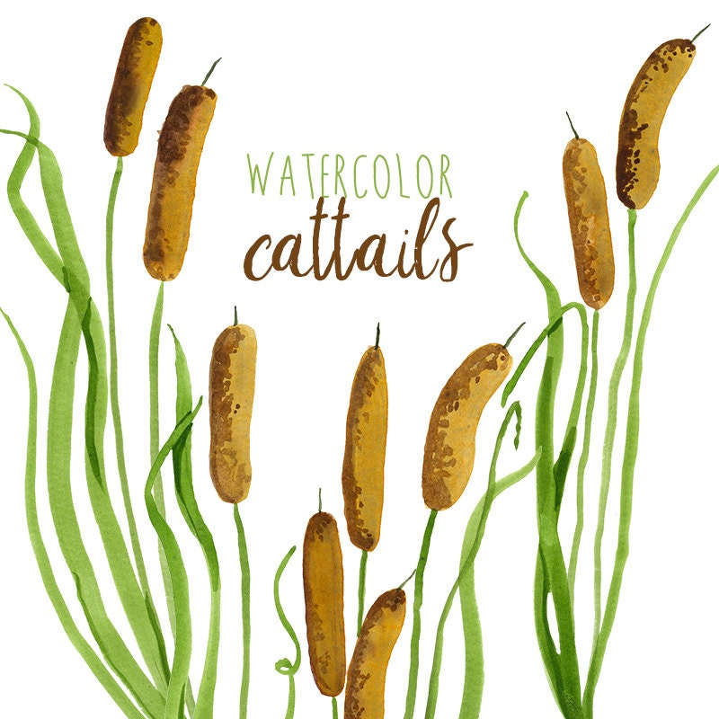 watercolor cattails clipart digital swamp images southern rh etsy com  cattails clipart black and white